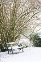 Bench under Corylus - Hazel tree with snow at Honeybrook House Cottage, Worcestershire