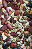 Mixed vegetable and herb seed. Runner, Dwarf and Broad Beans including yin and yang or Pea Bean, Carrots, Radish, Sweet corn, green and purple podded Peas, Pumpkins, Coriander and Lemon Grass.