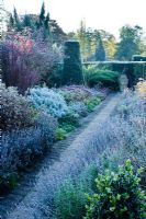 Garden on a frosty morning. Path with Lavender, Santolina, Sedums, Berberis, Rosemary and Taxus -Yew topiary obelisk. The Dry Garden, Cambridge Botanic Gardens.