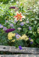 Mixed border in late summer with lilium, Aster frikartii 'Monch', Achellia taygetea and Buddleia
