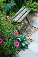 Garden seat with pink Cistus and Hosta