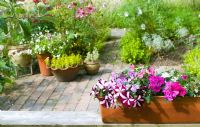 Windowbox with pink striped Petunias and Impatiens, herb garden behind