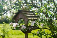 Bird table under blossoming apple tree