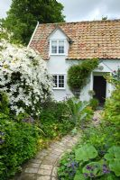Serpentine brick path leading to front door, Clematis montana to left - Wild Rose Cottage, Lode
