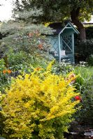 Berberis thunbergii 'Bonanza Gold' and Cornus controversa 'Variegata' in mixed border, painted gazebo in background