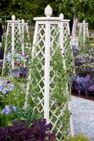 Painted obelisks with Lathyrus