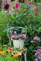 Bucket of cut flowers on old chair -Dianthus, Dahlias, Nigella, Centurea cyanus, Phlox and Calendula officinalis