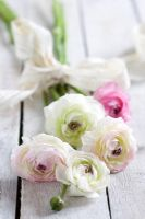 Small bunch of white and pink Ranunculus tied with antique lace ribbon