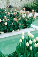 View across pool with white Tulipa and Iris. The Laurent  Perrier Garden designed by Jinny Blom. 2006 Chelsea Flower Show