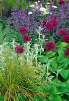 Allium, Stachys, Nepeta and Ornamental grass in border. The Telegraph garden - Designer Tom Stuart-Smith. Gold medal and Best in show at the RHS Chelsea Flower Show 2006