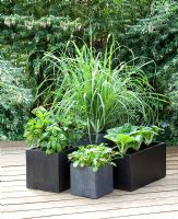 Grasses and vegetables growing in containers