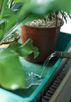 Houseplants on holiday.  Water the capillary matting until it is saturated. It will turn a darker colour.