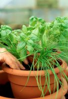 Making a herb container - Remove each plant from its pot and plant it firmly into its new container. Where possible, try to place herbs with similar growing speeds into the same tier, with the slowest growers highest up