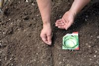 Sowing cabbage seeds