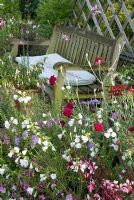 Wooden bench by colourful summer bed of Gaura, Dianthus, Scabious, Malva and Alchillea. 'Hazelwood', Jacqueline Iddon Hardy Plants, NGS garden, Lancashire