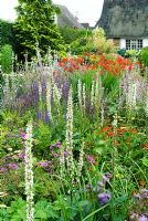 View across perennial beds with Verbascum chaixii 'Album', Helenium, Salvia sclarea var 'Turkestanica' and Crocosmia 'Lucifer'.  Richard Ayres, Lode Road, Cambridgeshire.