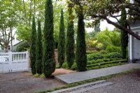 Entrance to suburban garden with bed of Cupressus sempervirens - Italian Cypresses and mature Magnolia tree. Christchurch, New Zealand