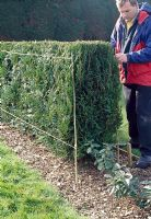 Hedge trimming. If you find it hard to cut hedges, put up two canes to the desired shape. Attach two lines between them to act as guidelines.