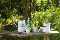 Herbs in tin ware