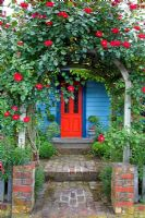 Entrance to cottage with Rosa growing on arch above path. No. 11, Christchurch, New Zealand