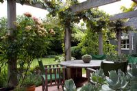 Dining area under wooden pergola with Vitis vinifera 'Purpurea' and Rosa 'Greensleeves'. Sedum in foreground. Christchurch, New Zealand