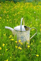 Buttercup meadow with watering can