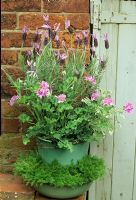 Summer planting in matching enamel bucket and bowl with French Lavender and scented leaved pelargonium, in the bowl beneath, Chamaemelum nobile 'Treneague'