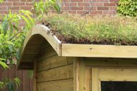 Sedum roof on summerhouse, July