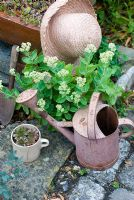 Sedum with pink watering can and hat