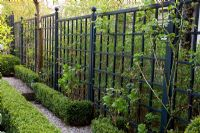 Black painted trellis and Buxus - Box edging in small urban garden