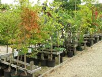 Good quality container grown trees for sale at Waterperry garden centre