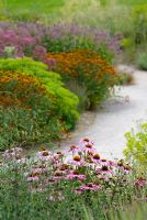 Echinacea purpurea in a border with Helenium and Eupatorium