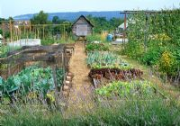 Lavender border, mixed lettuces, onions, cabbages, runner beans, shed and greenhouse on allotment