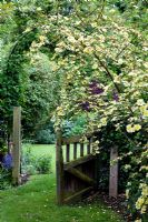 Garden gate with Rosa 'Canary Bird'