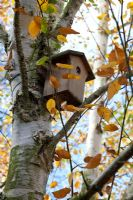 Bird box in silver birch tree