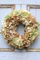 Christmas wreath made with dried Hydrangea flowers, hanging from rustic door
