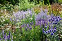 Echinops ritro 'Veitch's Blue', Agastache 'Black Adder' and Eryngium yuccifolium at RHS Gardens Wisley