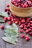 Making a Cranberry and Bay leaf decorative ring - Cranberries and bay leaves