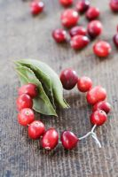 Making a Cranberry and Bay leaf decorative ring - finished decoration