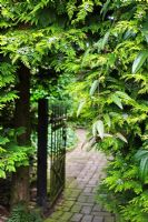Cypress and Clematis Armandii growing over gateway with path through to courtyard of old bricks