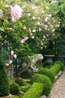 Rosa climbing on trellis in long narrow small formal garden with gravel path and Buxus topiary. Owner and designer Georgie Roberts, The Old School House, Great Bentley, Essex, UK