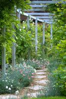 Stepping stone and gravel path under pergola, edged with Dianthus and with Clematis climbing  up it. Parsons Cottage