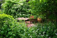 Cafe style table and chairs in secluded shady garden, planting of Viburnum plicatum 'Mariesii' and Geranium, empty terracotta urn as focal point - The White House, Keyworth, Nottinghamshire