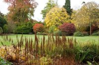 Woodland garden in Autumn with colourful trees and shrubs, tall brown seedheads of Astillbe in the foreground - The Savill Garden, Windsor Great Park