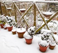 Heavy snow fall on containers and trellis, High Meadow , Cannock Wood, UK