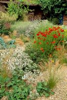 Gravel garden in late summer with perennials and grasses - Eryngium, Stipa tenuissima and Helenium