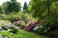 Woodland garden with Hydrangeas in July - The Savill Garden, Windsor Great Park