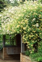 Lonicera etrusca 'Superba' and Rosa mulliganii climbing over gazebo