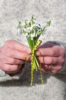 Man holding a posy of Snowdrops tied with a yellow ribbon, Galanthus elwesii and Galanthus nivalis