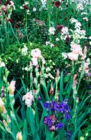 Irises with Aquilegia, Astrantia and night scented stock - The Laurent Perrier Garden, RHS Chelsea Flower Show, 2006